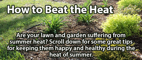 Summer Heat Getting Your Plants Down?