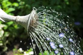Erins Garden Water